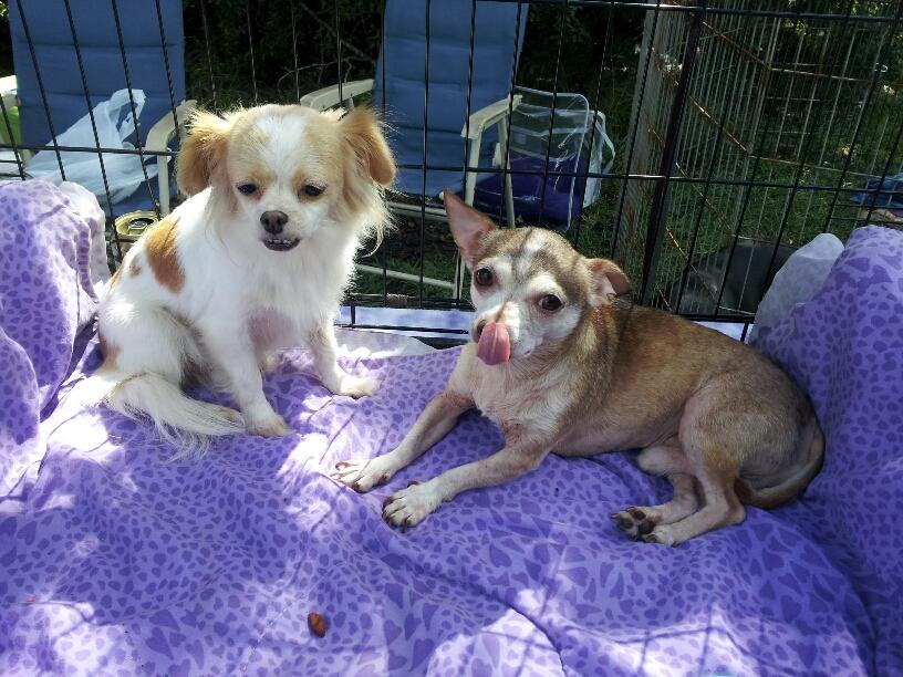 Cookie & Gunney